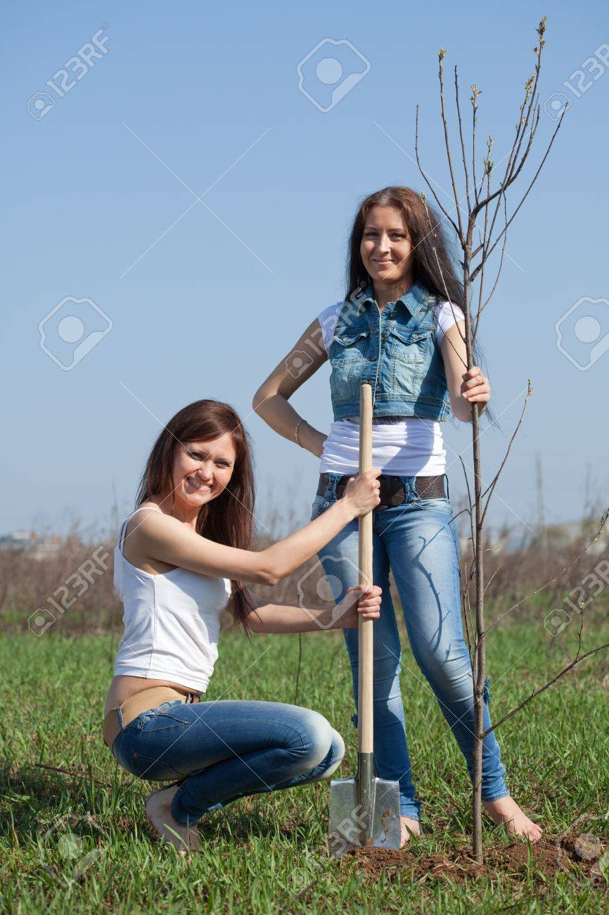 Two Female Gardeners Planting Tree Outdoor In Spring Stock Photo