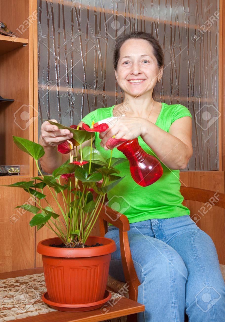 femme d'âge mûr arrosage des fleurs d'anthurium en pot floraison