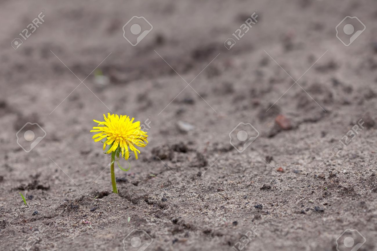Growing  yellow flower sprout in ground Stock Photo - 14104608