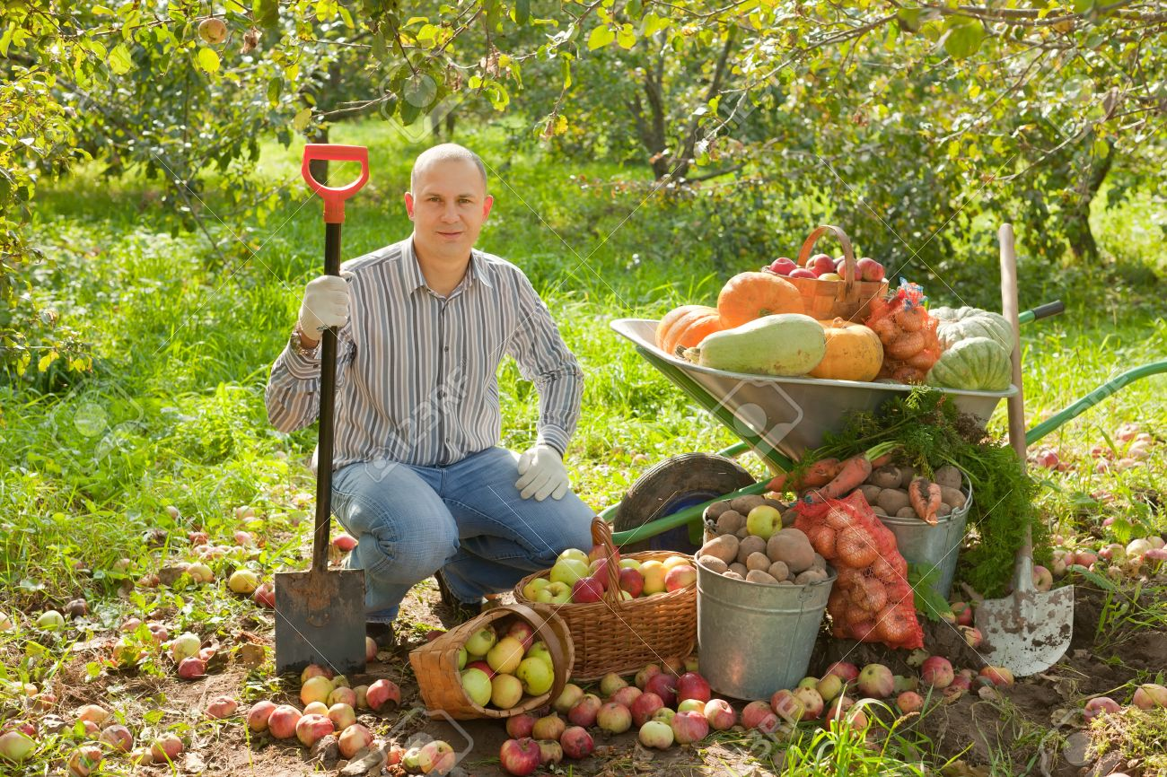 Happy Man With Vegetables Harvest In Garden Stock Photo Picture