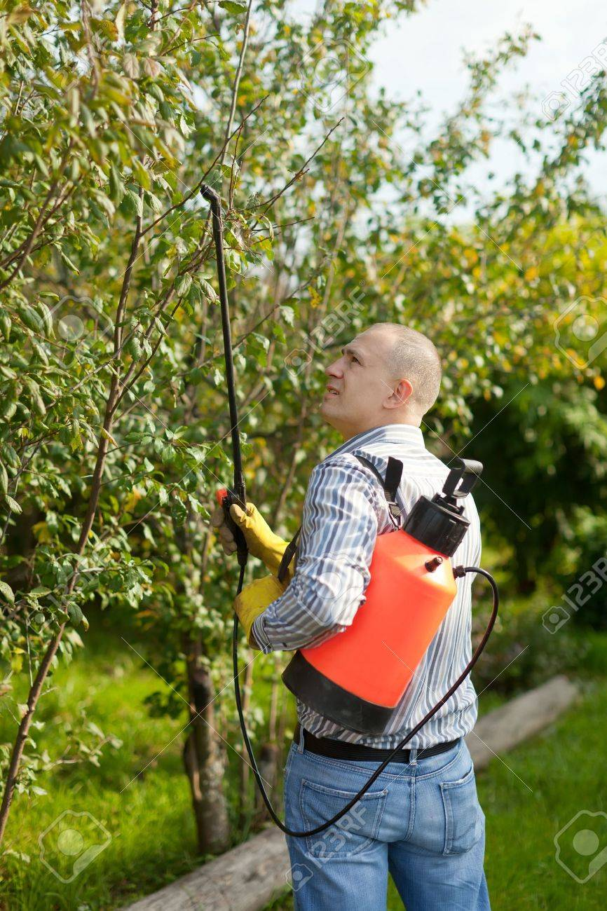 working man with garden spray  in orchard Stock Photo - 15423775