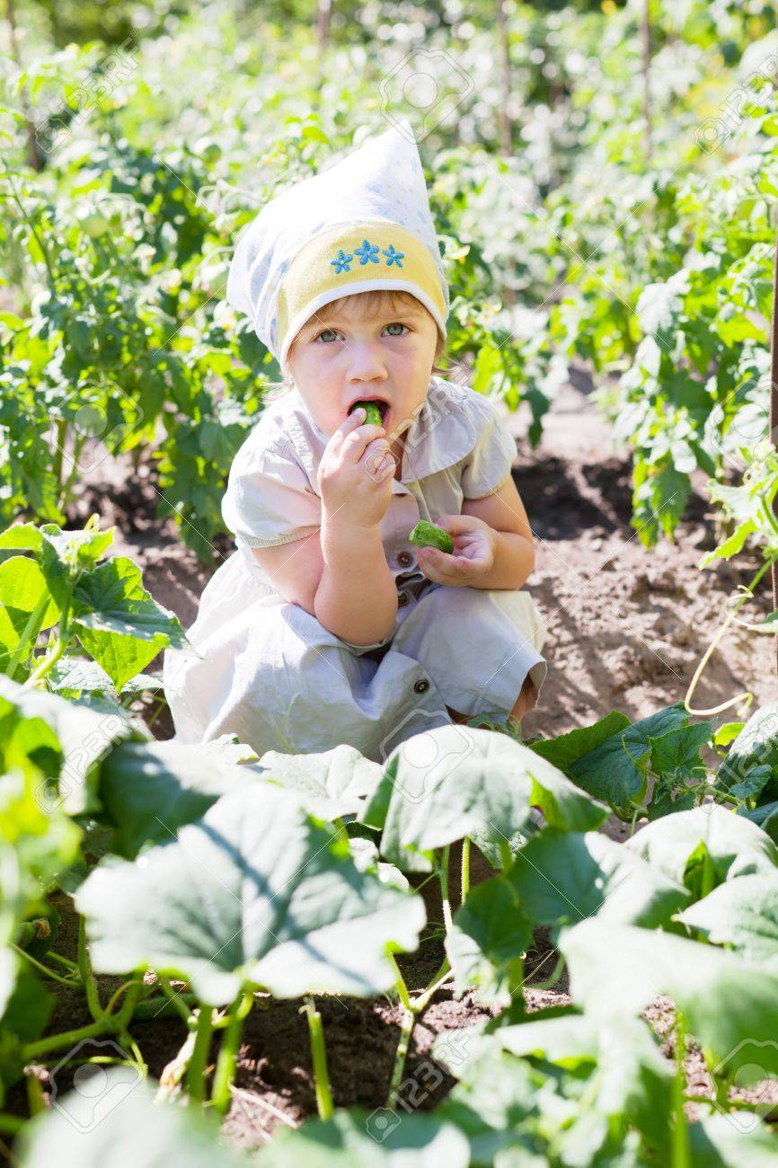 2 years baby girl eats cucumbers at plant Stock Photo - 16863019