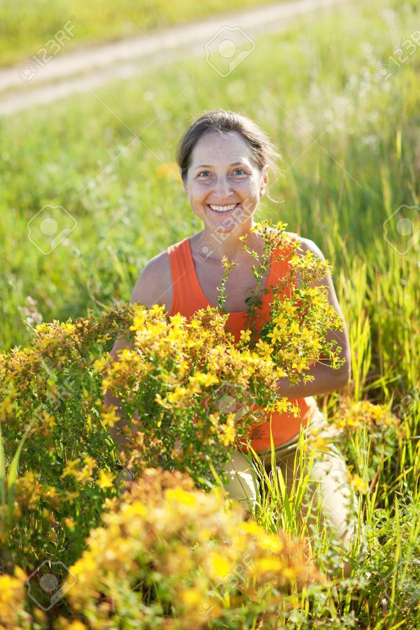 Mature Woman Gathers Herbs At Wild Meadow Stock Photo, Picture And ...