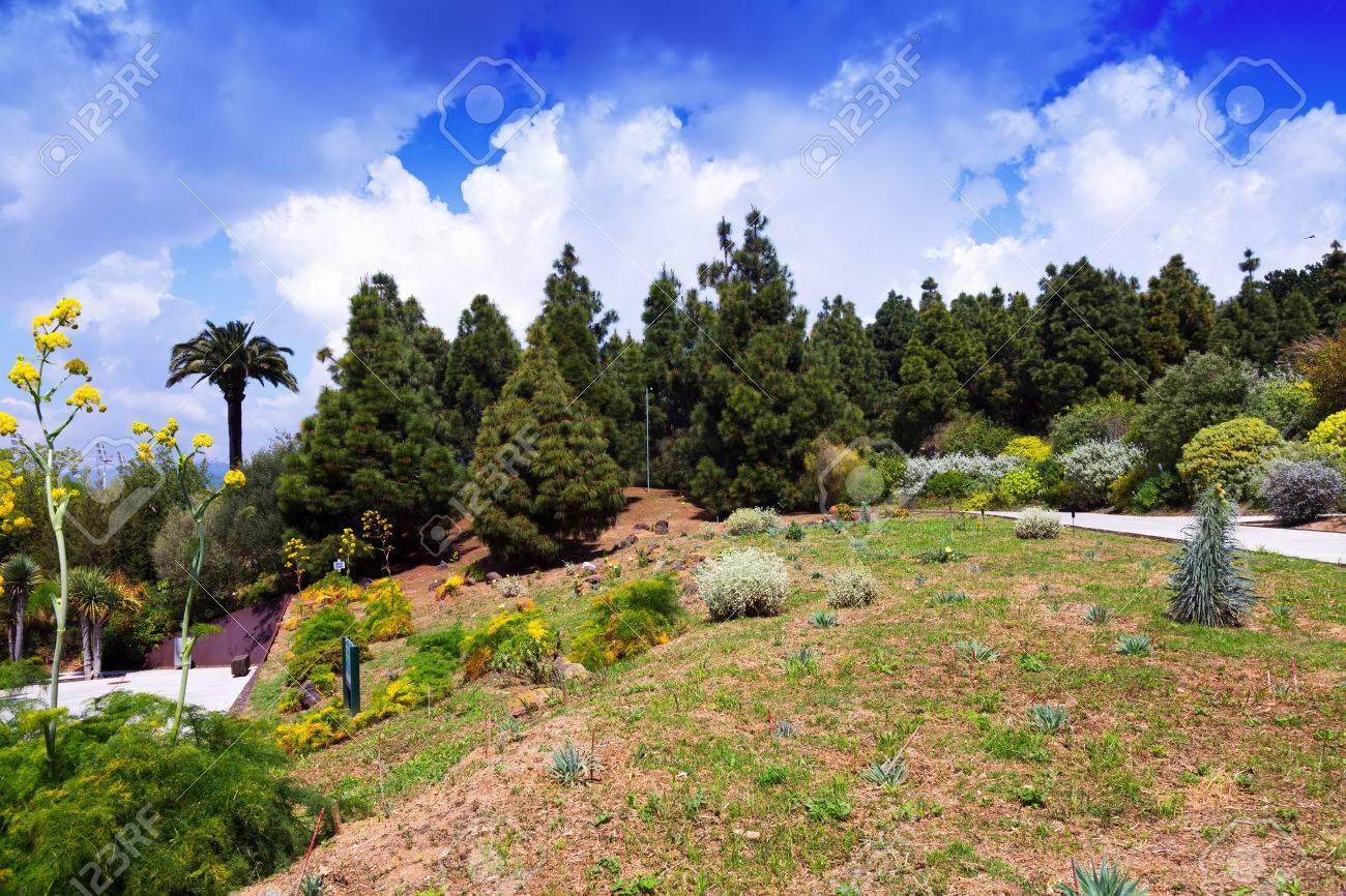Ansicht Von Botanischer Garten Von Barcelona Im Frühjahr Spanien