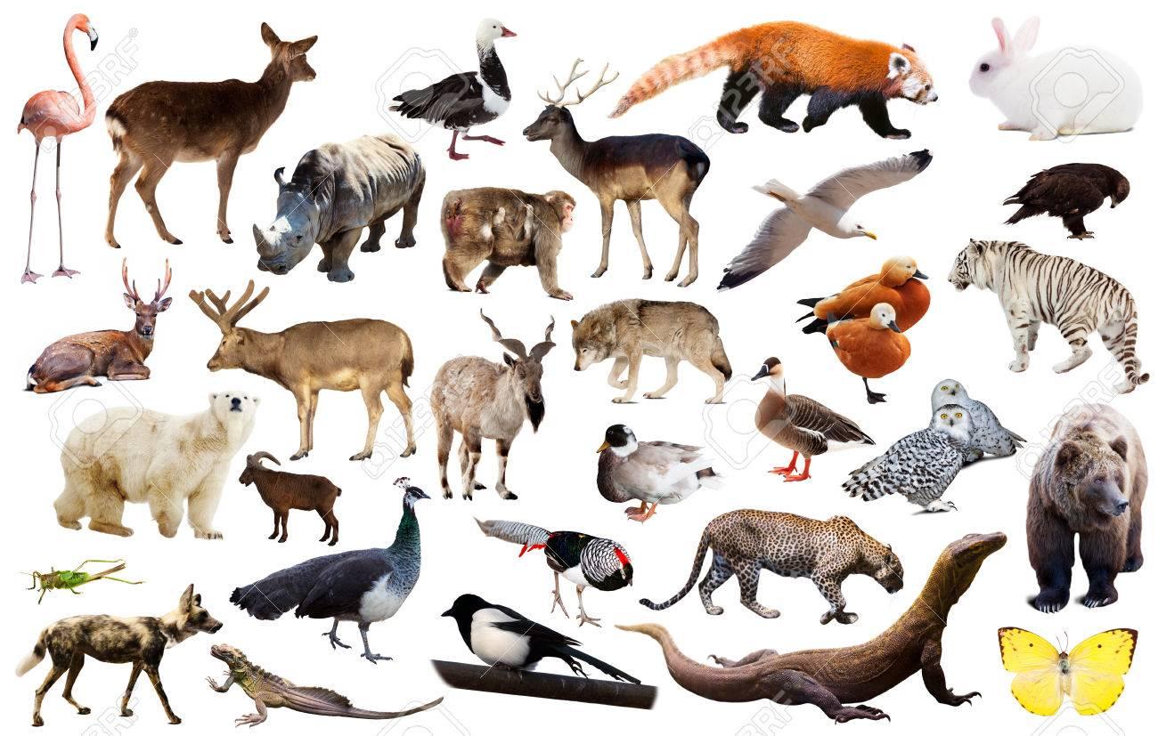 鳥、哺乳類、爬虫類、昆虫を含む様々 なアジア分離野生動物のセット の ...