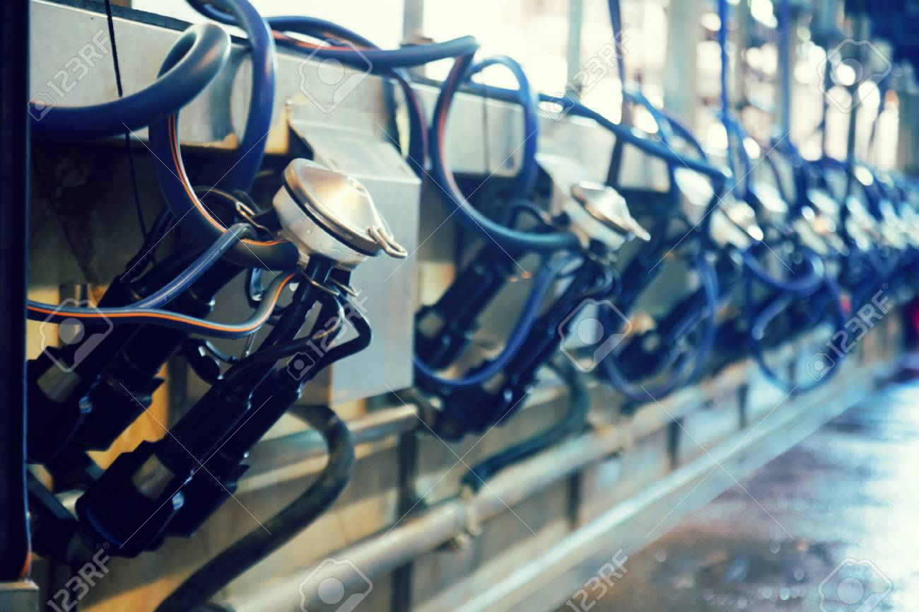 Close Up Of Milking Facility On Modern Dairy Farm Stock Photo