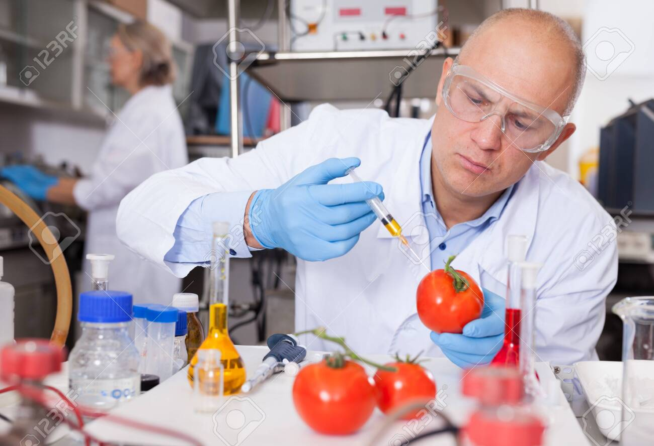 Scientist injecting reagent into tomatoes - 156999372