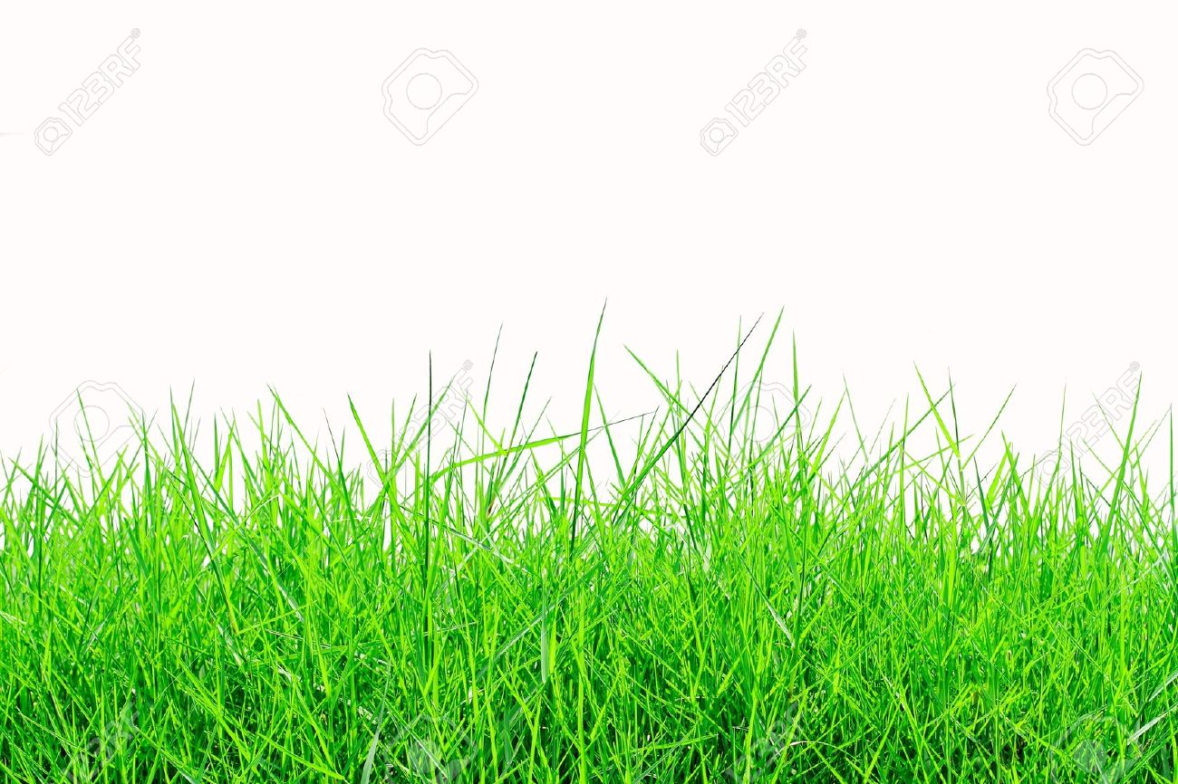 Fresh spring green grass isolated on white background Stock Photo - 10384364