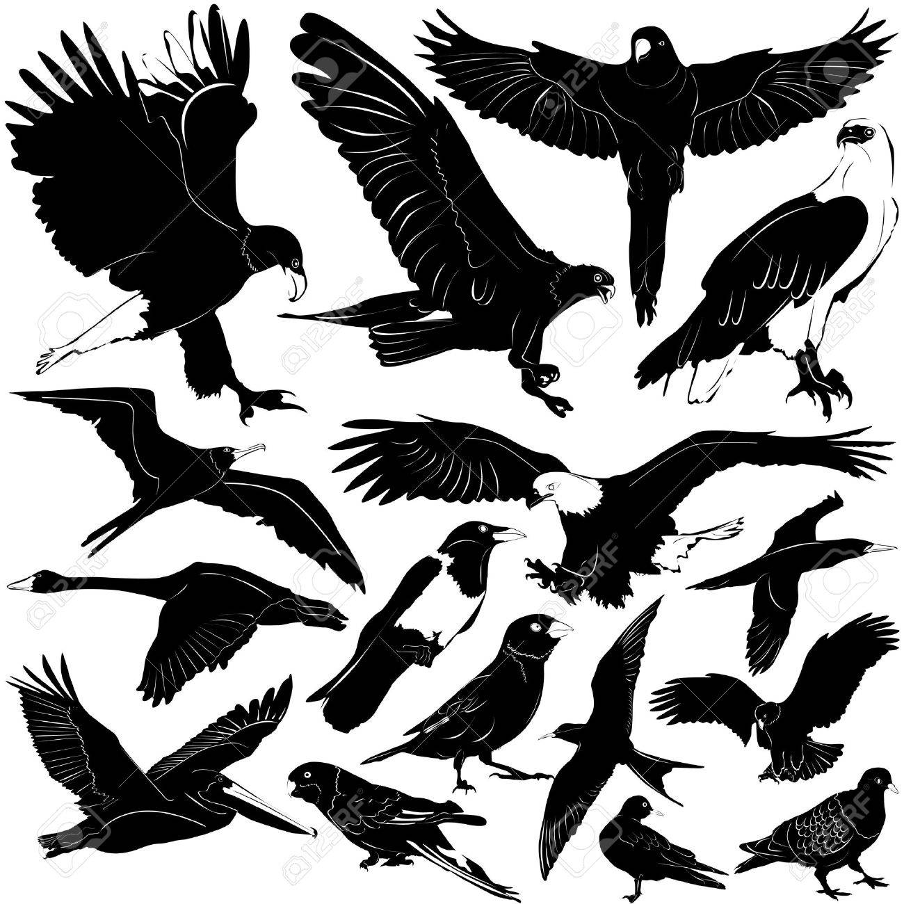 birds  details   eagle  wings   Eagle Wings Silhouette