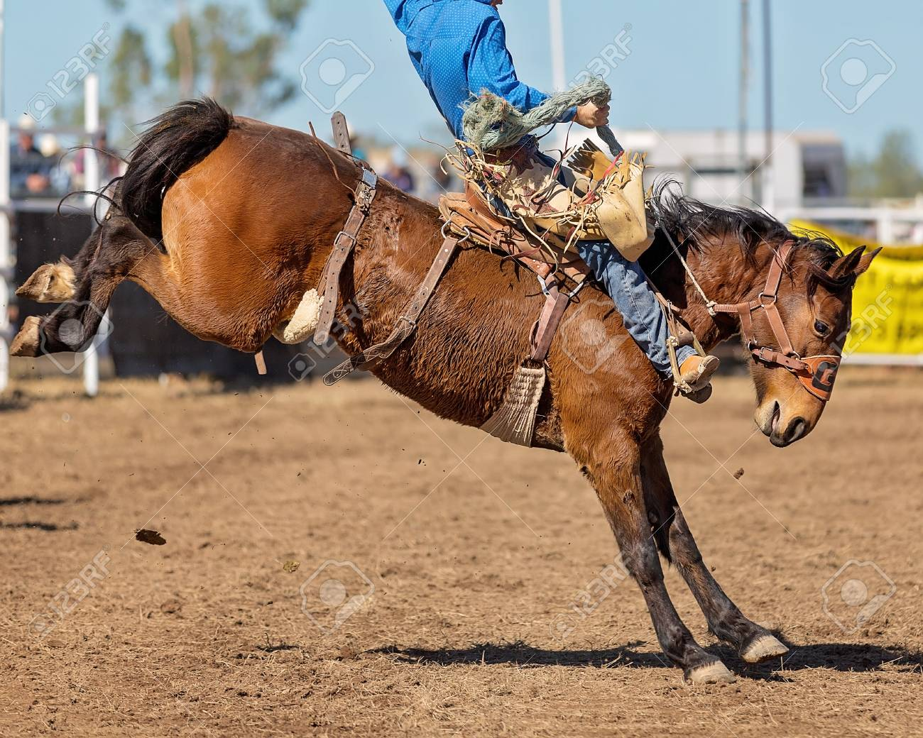 A cowboy riding a bucking bronco horse in a competition at a country rodeo stock photo