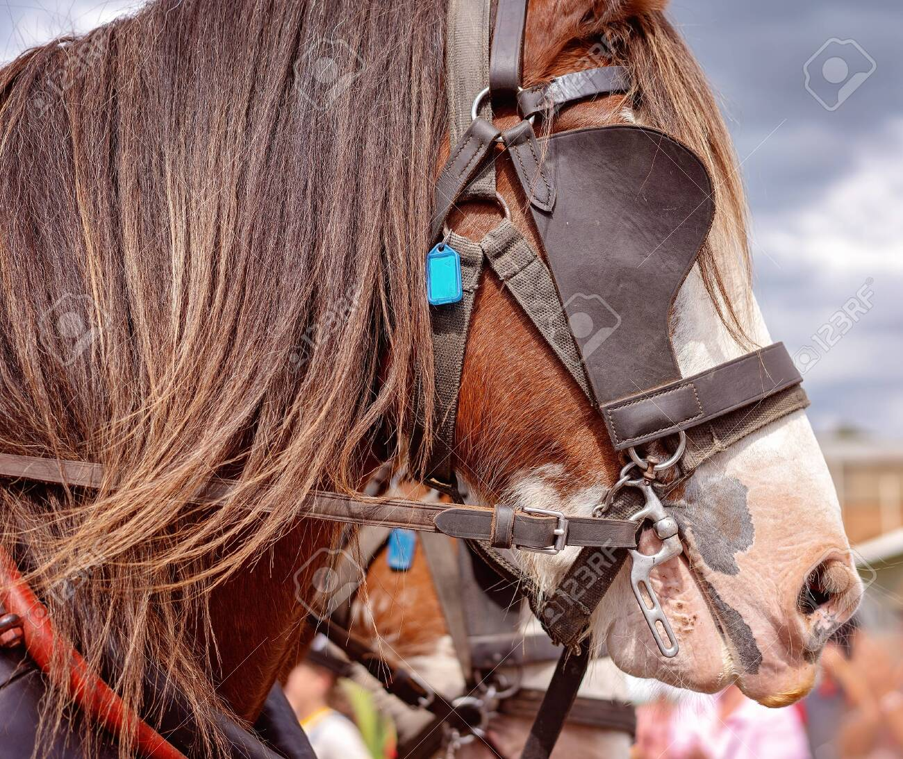 A Draft Horse In Harness Pulling A Wagon In A Street Procession Stock Photo Picture And Royalty Free Image Image 120672828
