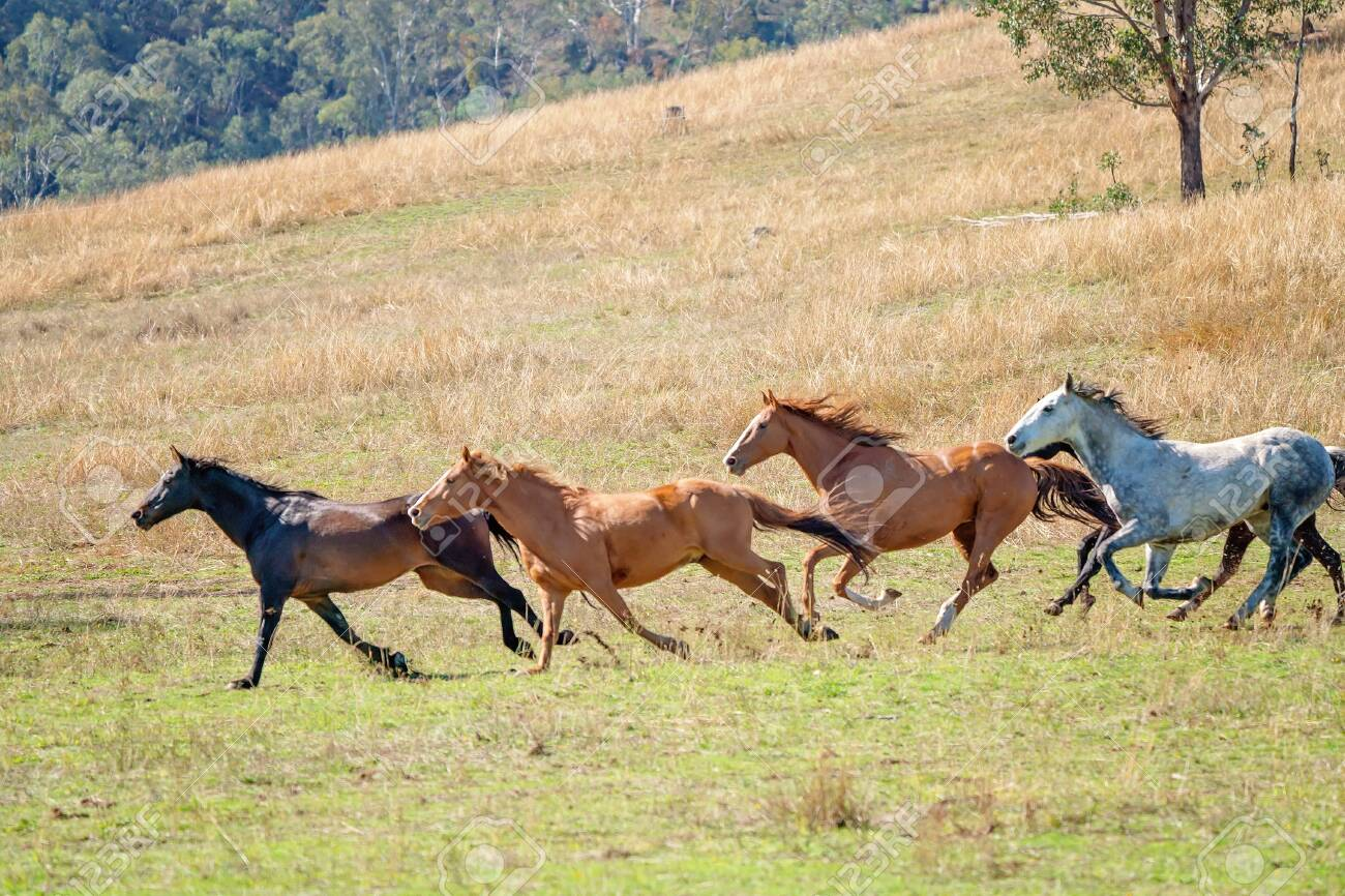 A Herd Of Wild Horses Running Free Across The Plains Stock Photo Picture And Royalty Free Image Image 123817532