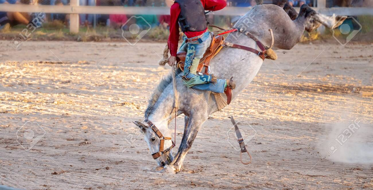 Cowboy Rides A Bucking Bronc Horse In A Sanctioned Competition Stock Photo Picture And Royalty Free Image Image 123815803