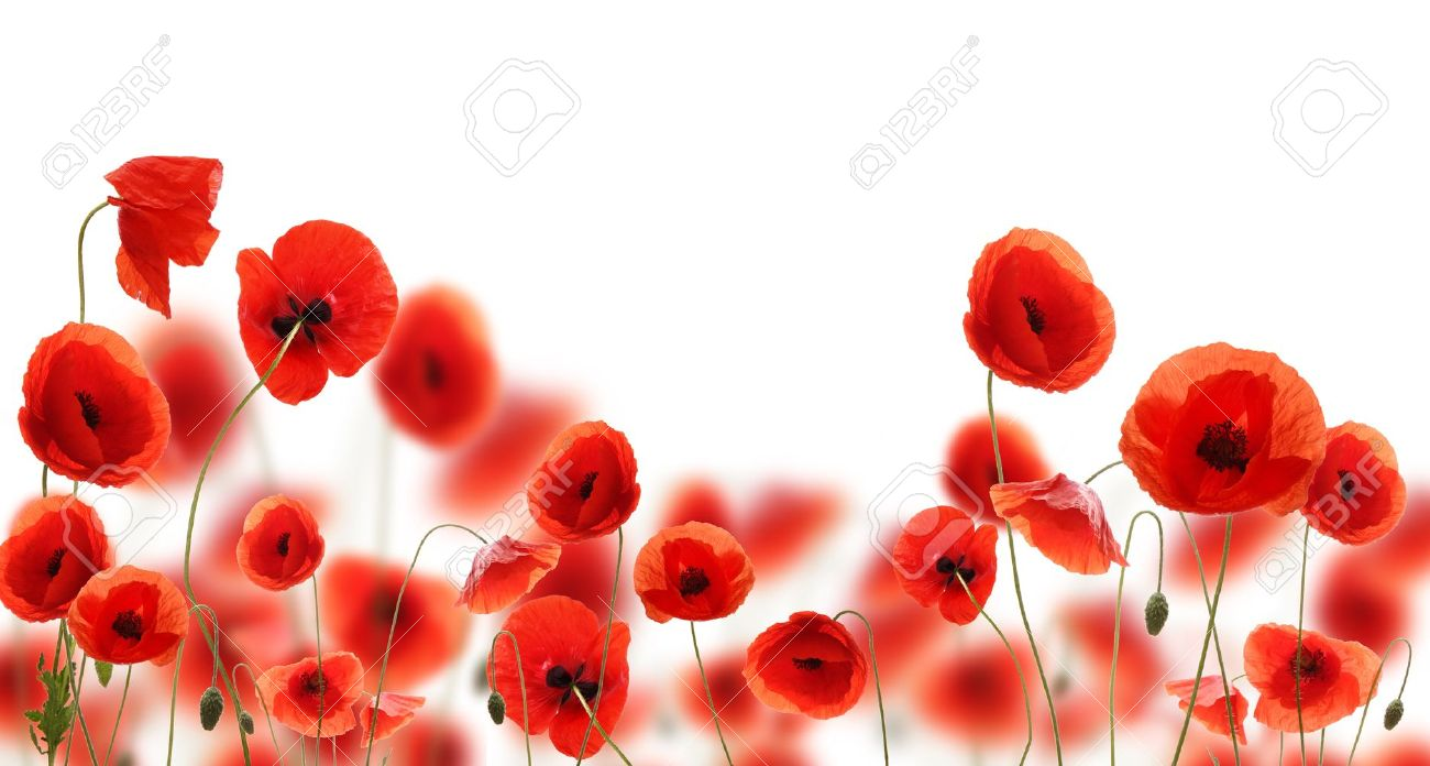 Poppy Flowers Isolated On White Background Stock Photo Picture And