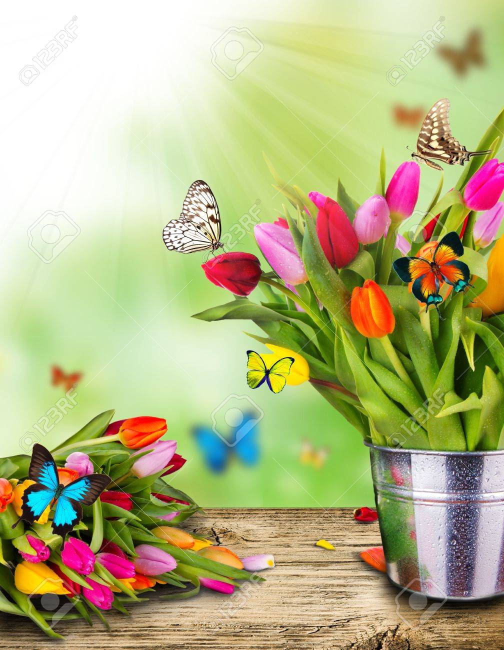 Colored tulips flowers with exotic butterflies Stock Photo - 13672324