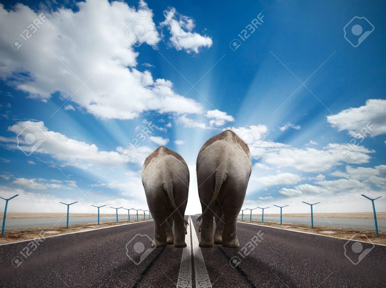 Two elephants walking on runway with sunny sky Stock Photo - 14442665