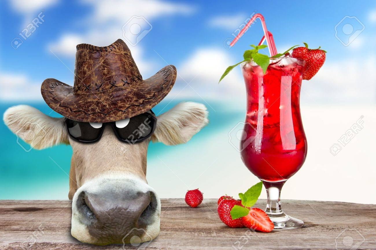 Funny cow with drink, concept of summer holidays Stock Photo - 14441852