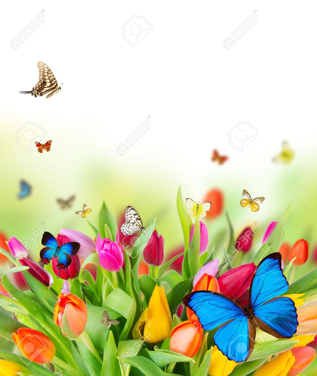Beautiful Spring Flowers With Butterflies Stock Photo Picture And