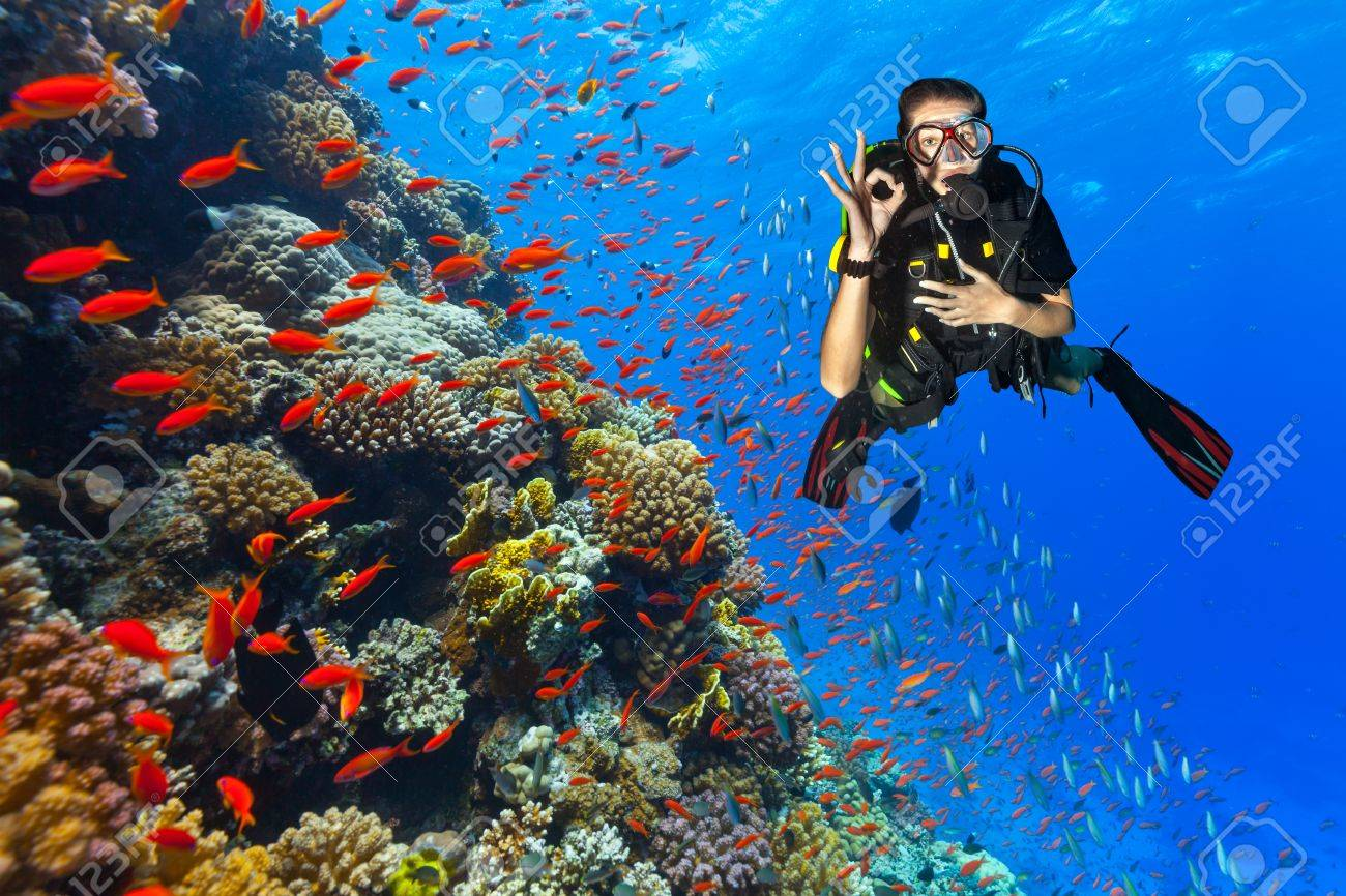 Female scuba diver showing ok sign, explore beautiful coral reef. Underwater photography in Red Sea, Egypt - 53581666