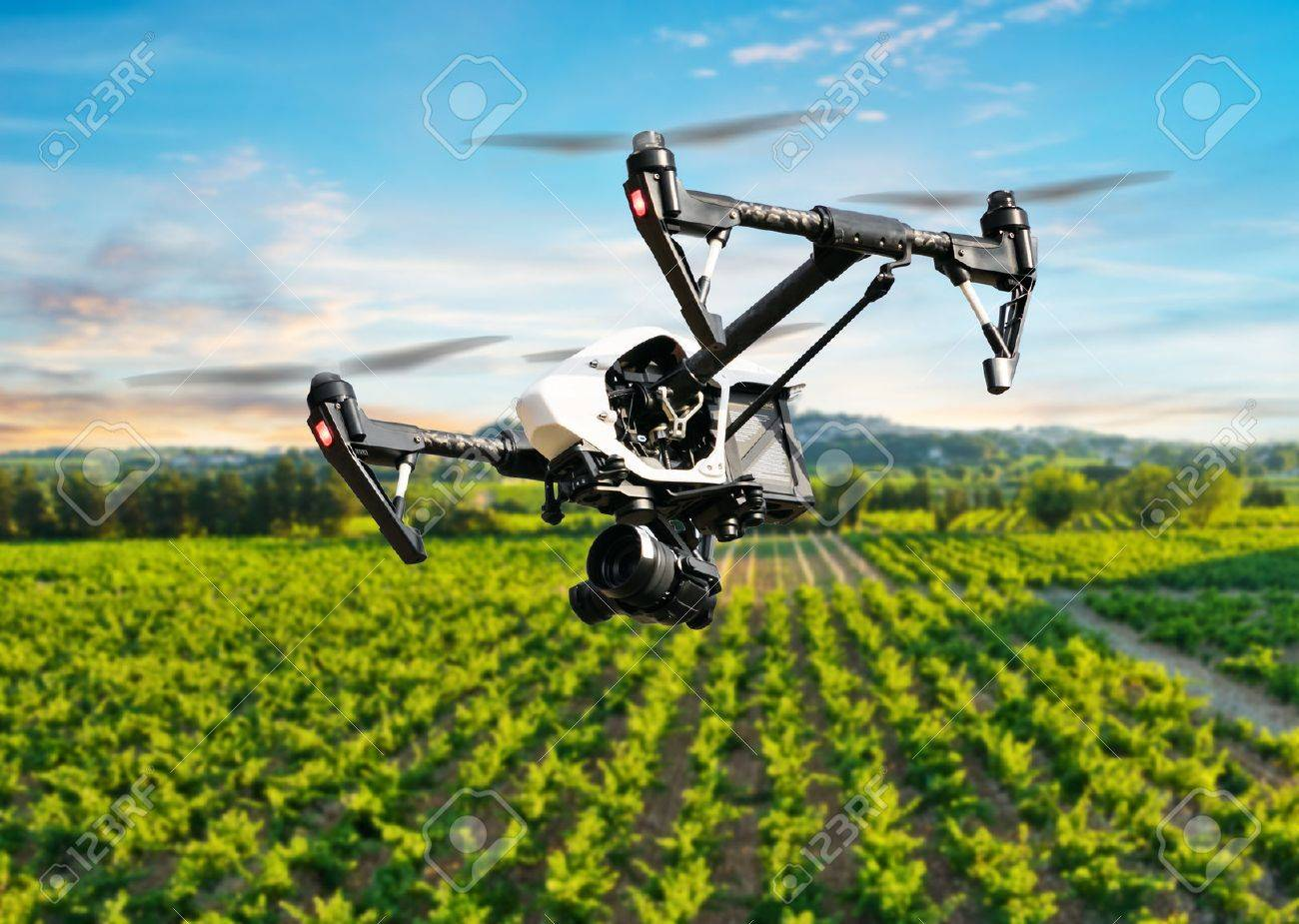 Drone Flying Above Beautiful Landscape With Vineyards Stock Photo