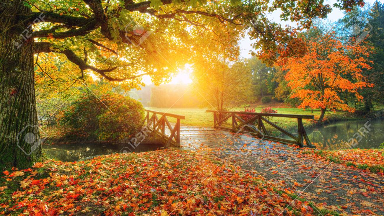 Beautiful autumn scenery in park. Outdoor photography in sunrise light - 87936538