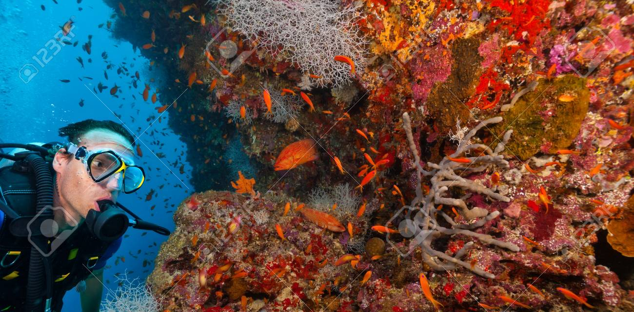 Young man scuba diver exploring coral reef, underwater activities - 95681398