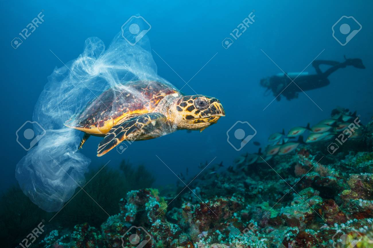 Underwater concept of global problem with plastic rubbish floating in the oceans. Hawksbill turtle in caption of plastic bag - 121033670