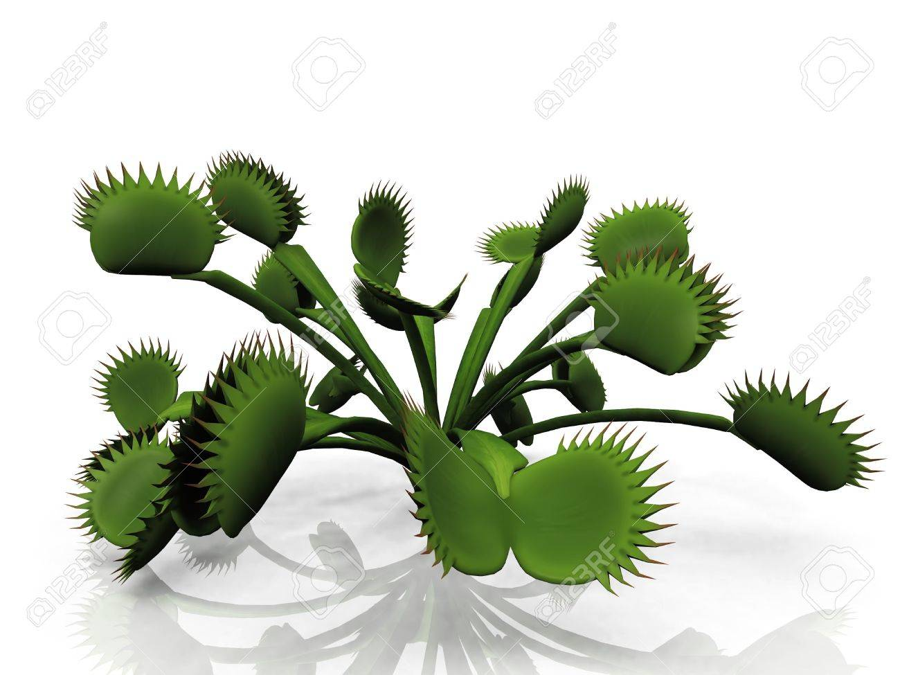 Venus flytrap on a a white background Stock Photo - 10956885
