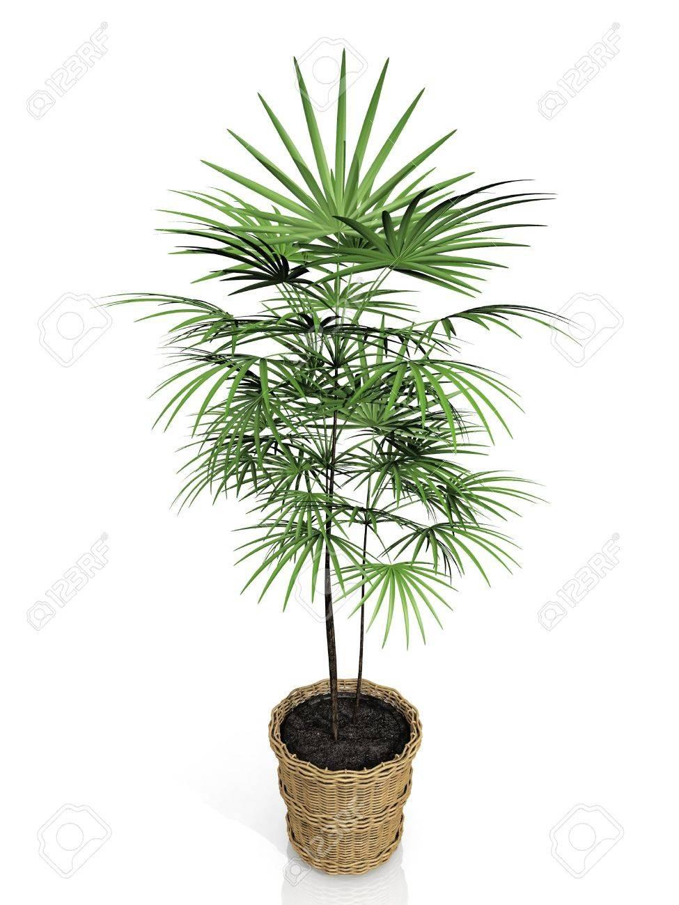 houseplants on white background - 10956953