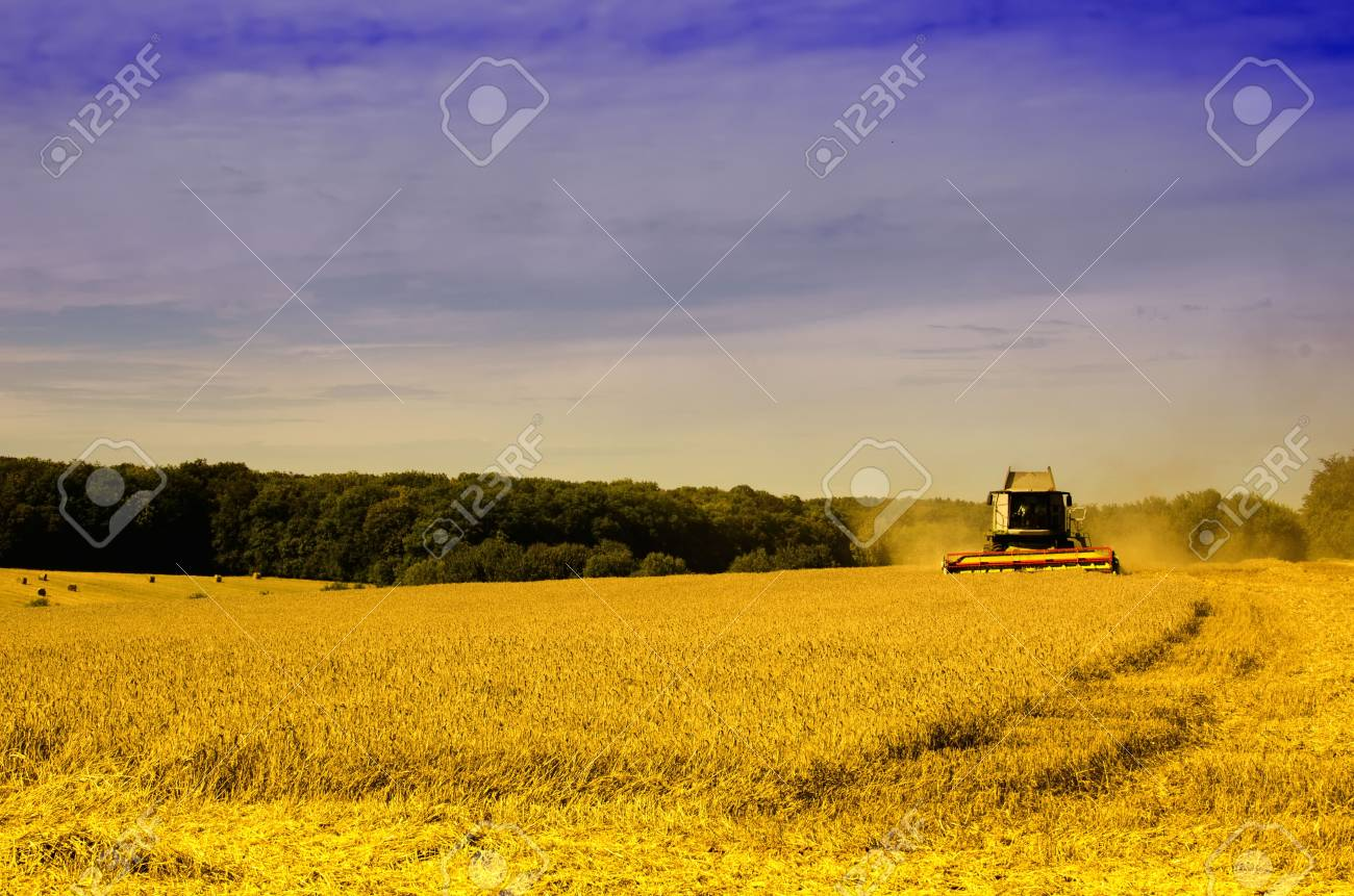 the harvester on the wheat field Stock Photo - 11241871