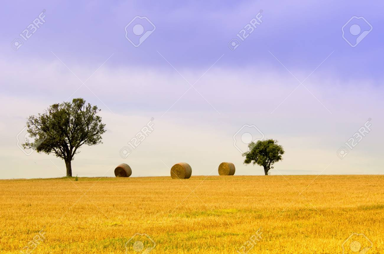 the tree  and straw bales Stock Photo - 15823211