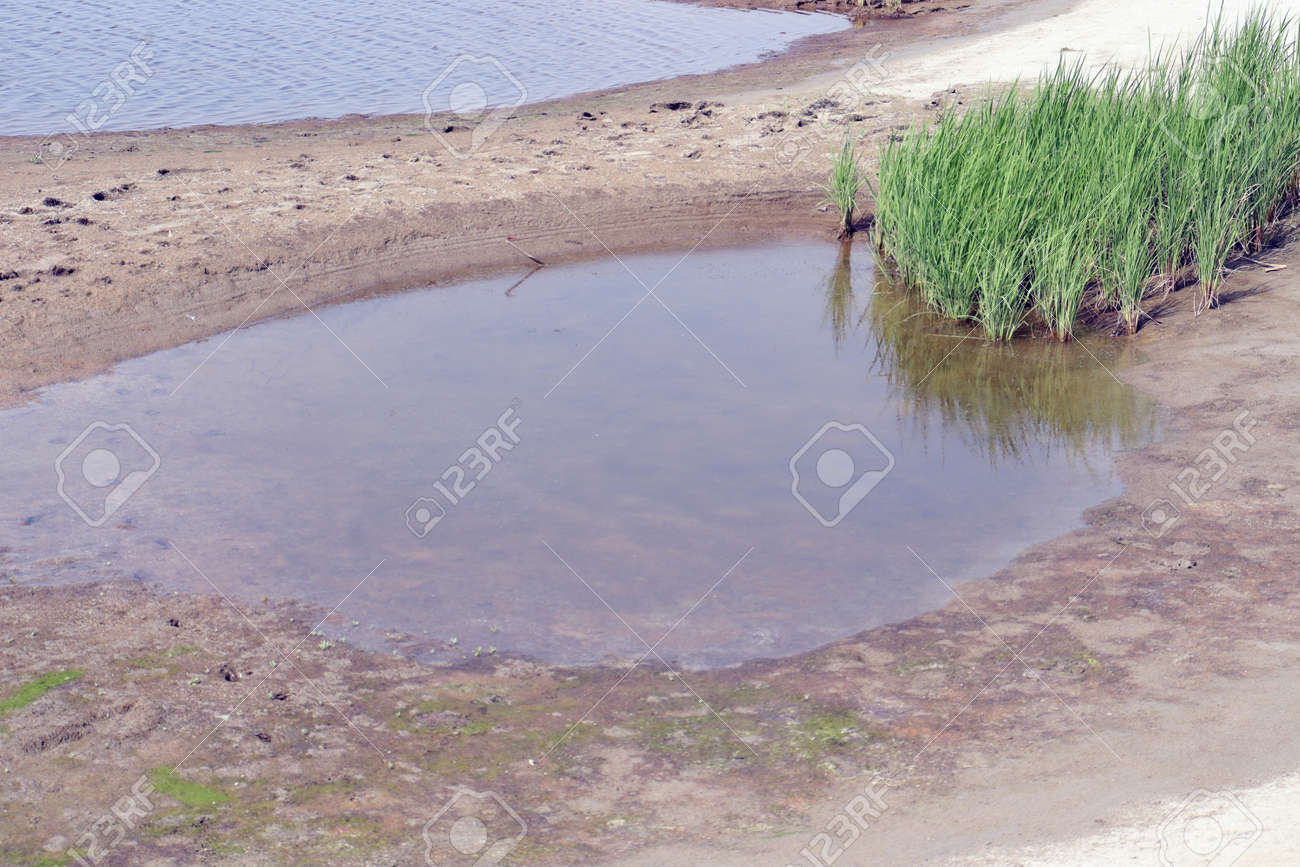 lake view with paddy firm and nature - 170867990