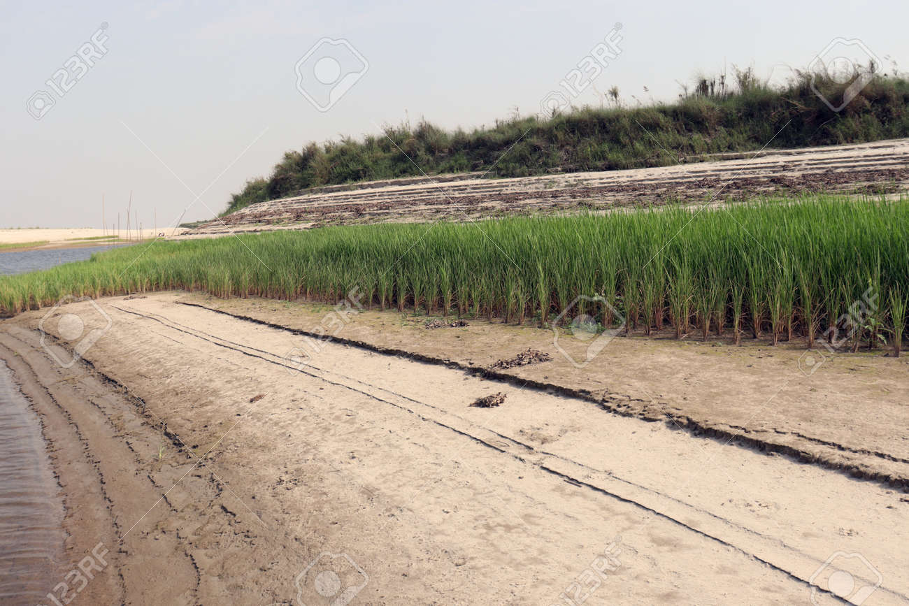 paddy firm on near of lake and nature - 170535825