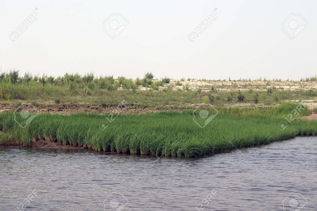 lake view with paddy firm and nature - 170535826