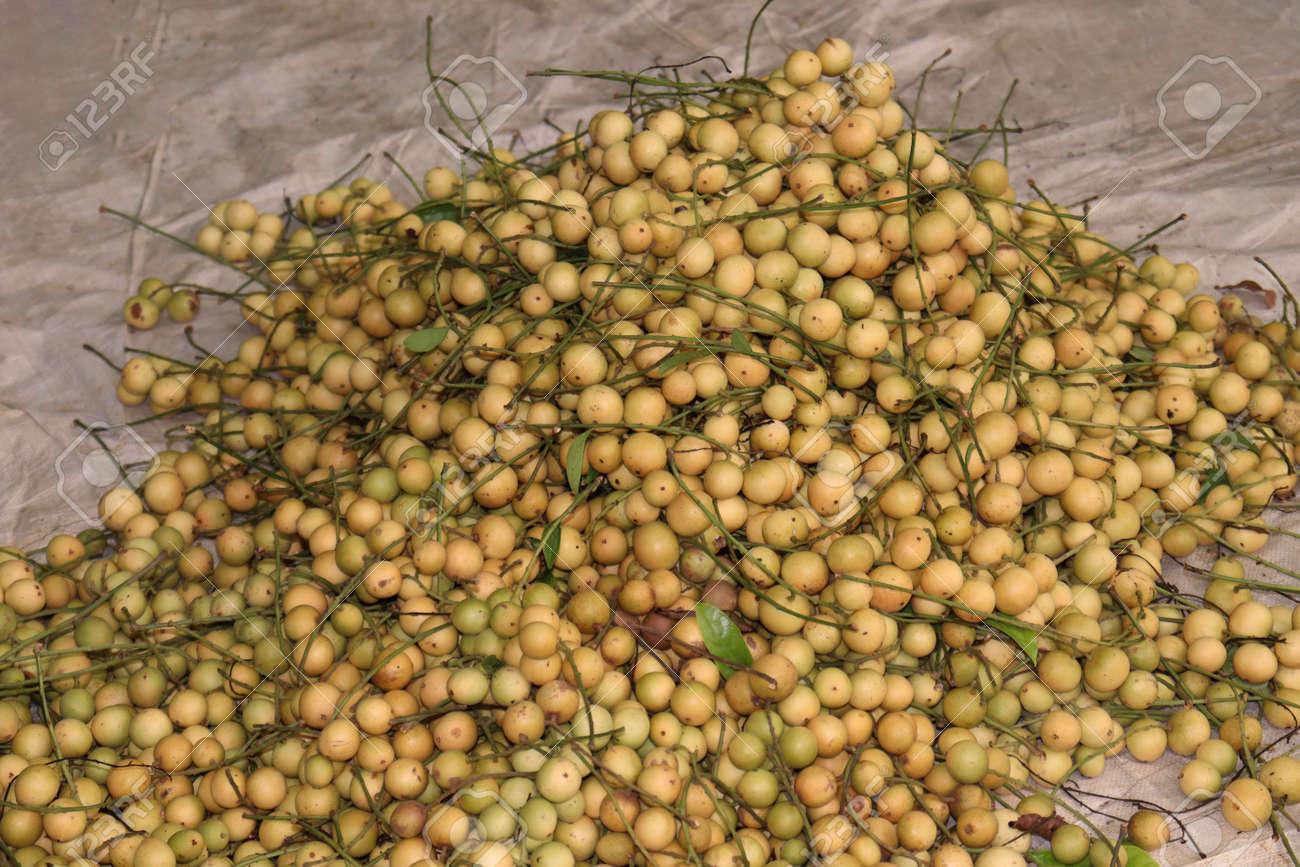 tasty baccaurea motleyana stock on farm for sell and eat - 170752283