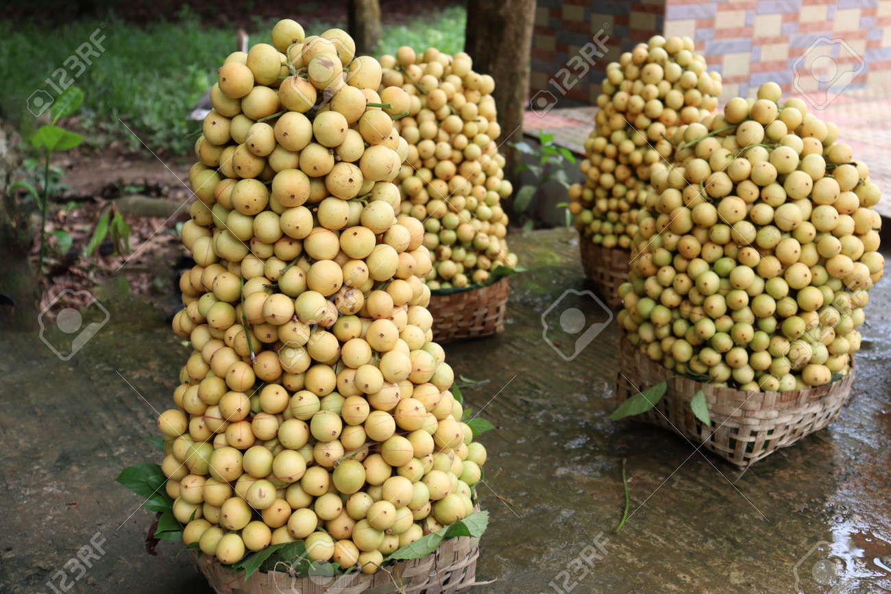 tasty baccaurea motleyana stock on basket in the farm for harvest - 170752292