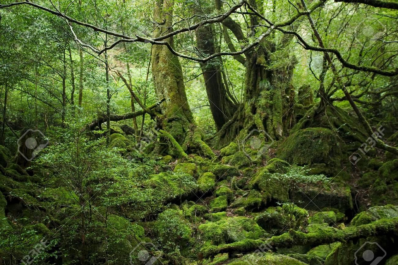 forest in Yakushima island - 75787083
