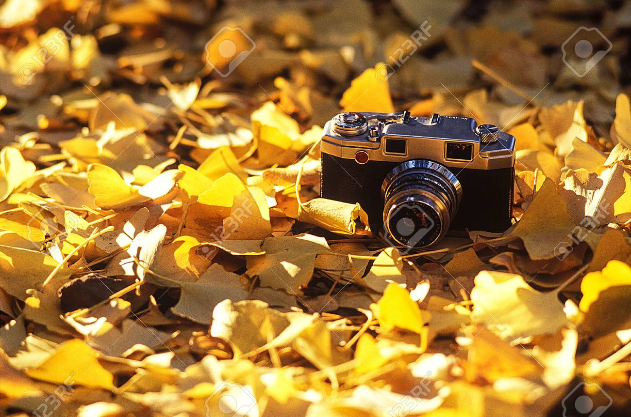Camera and Leaves of ginkgo biloba - 88286882