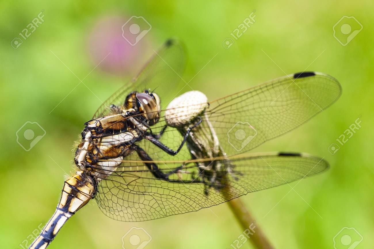 Dragonfly - 107484039