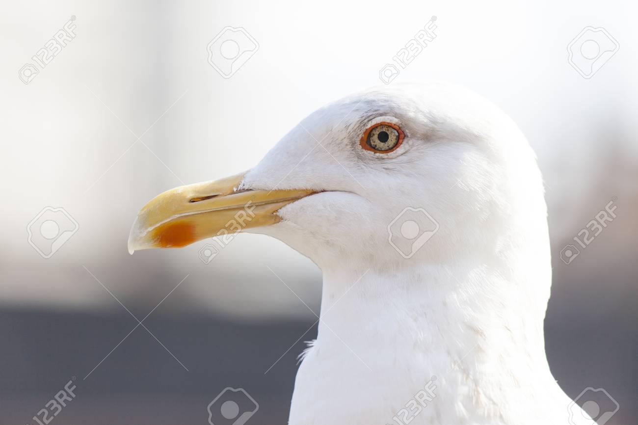 Seagull - 108900642
