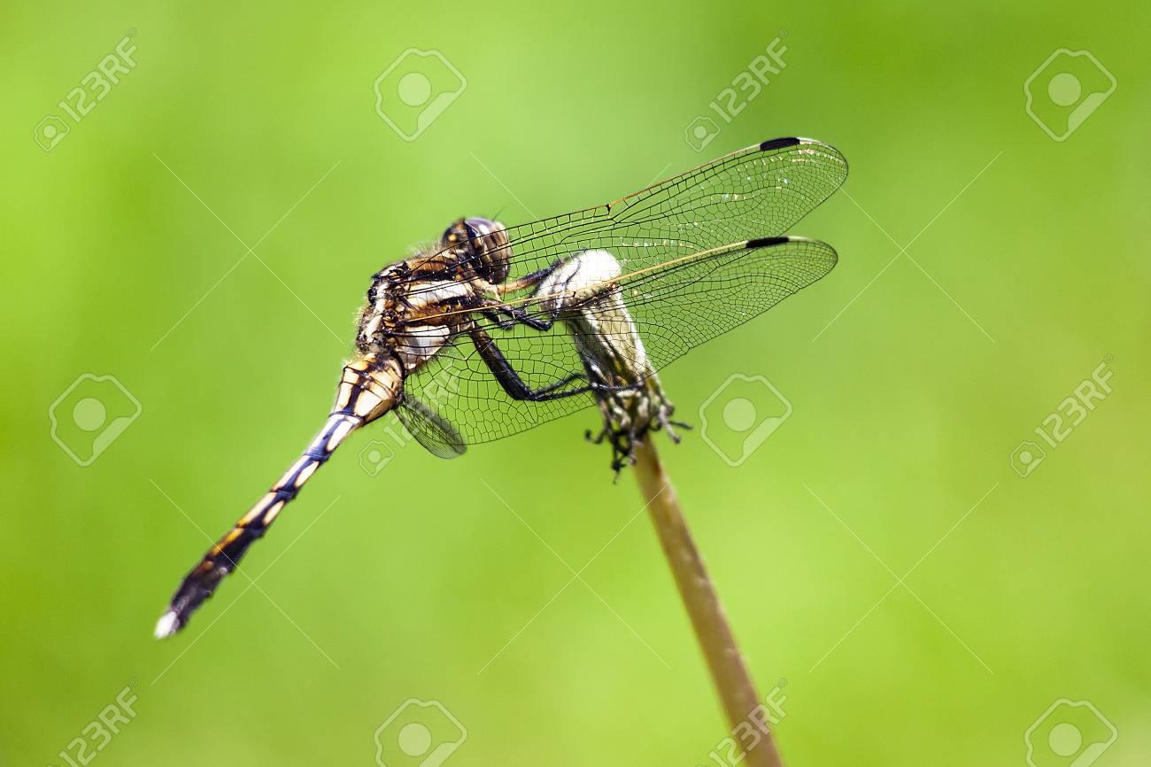 Dragonfly - 110567631