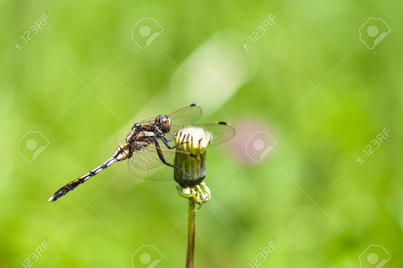 Dragonfly - 132167487