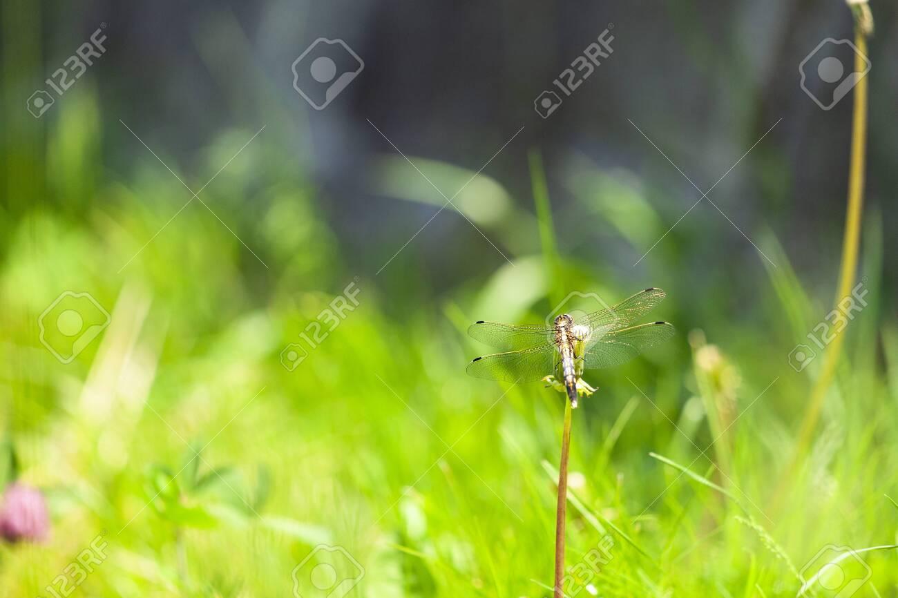 Dragonfly - 132167526