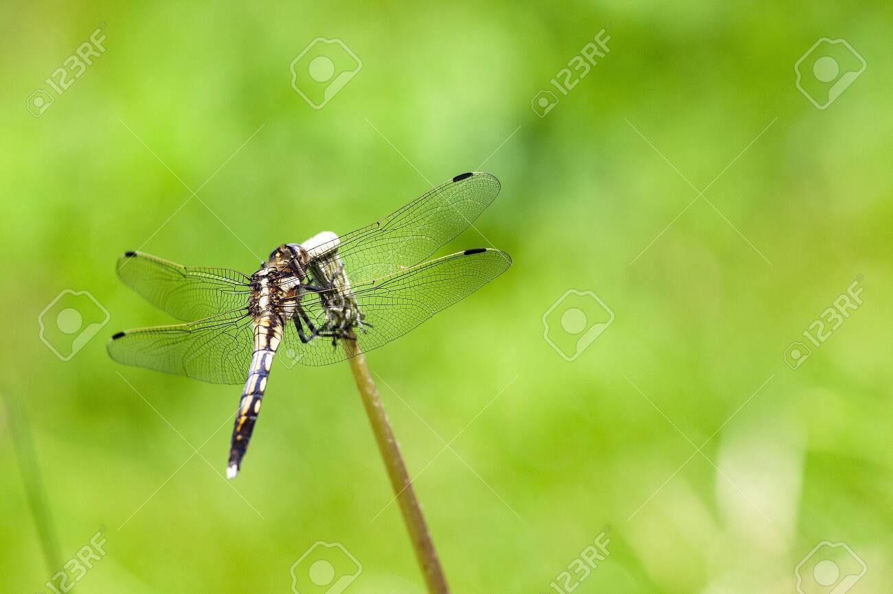 Dragonfly - 132167614