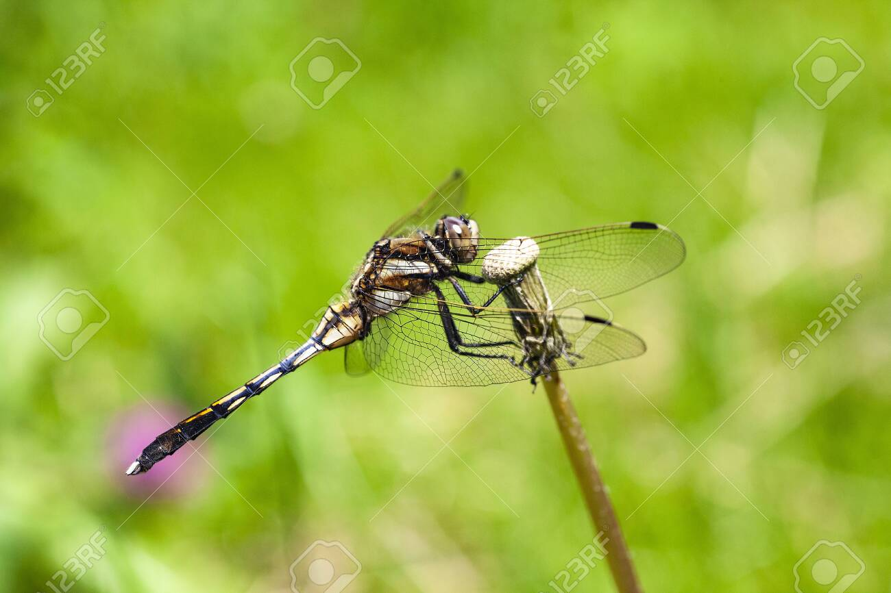 Dragonfly - 132167638