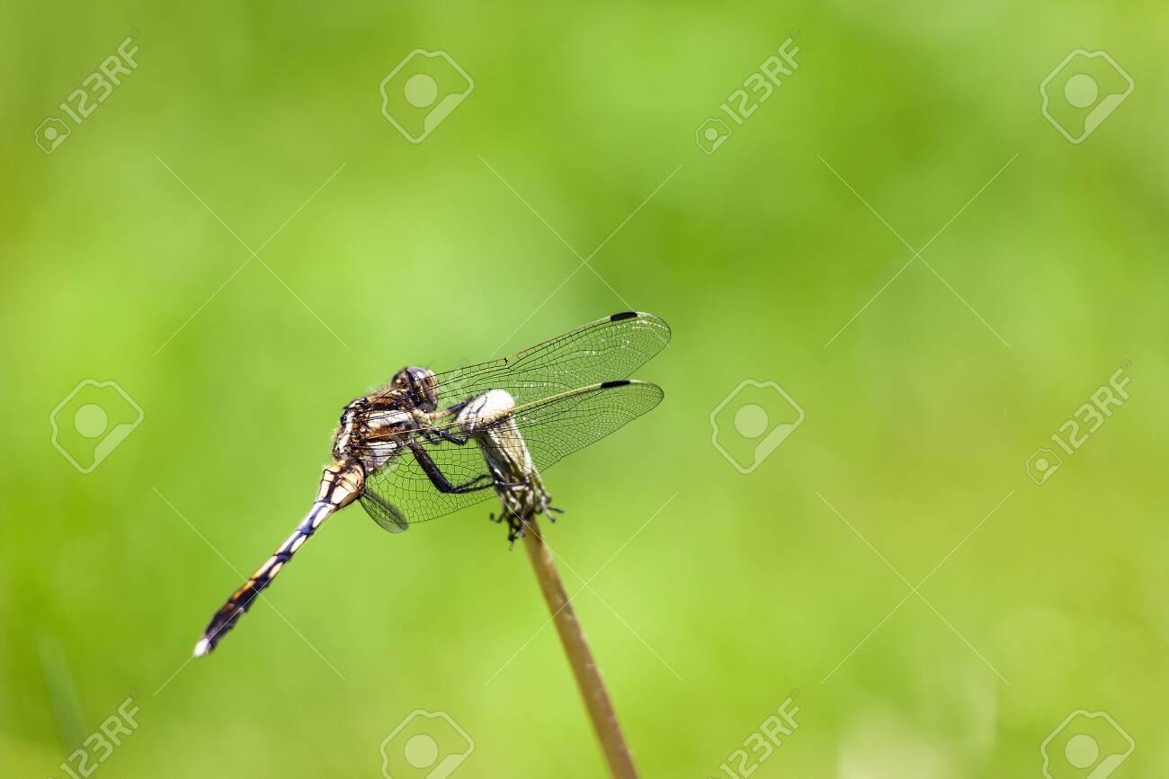 Dragonfly - 132921974