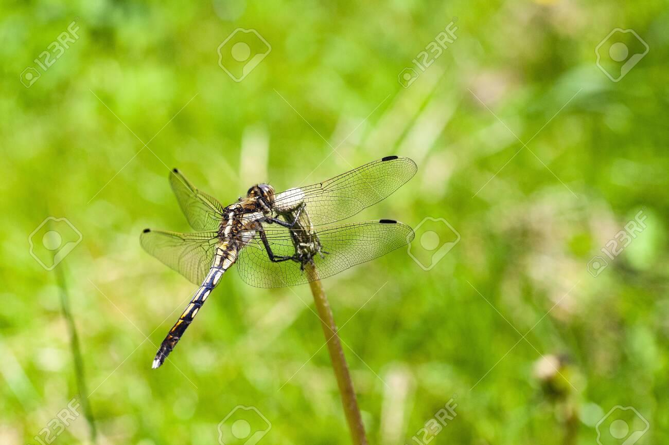 Dragonfly - 132921985