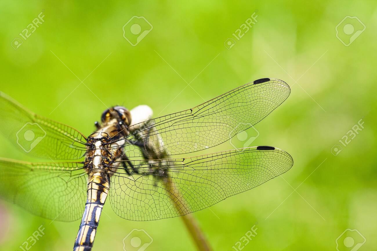Dragonfly - 132921996