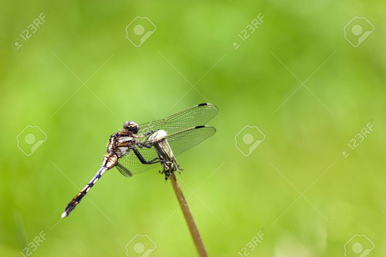Dragonfly - 134712377