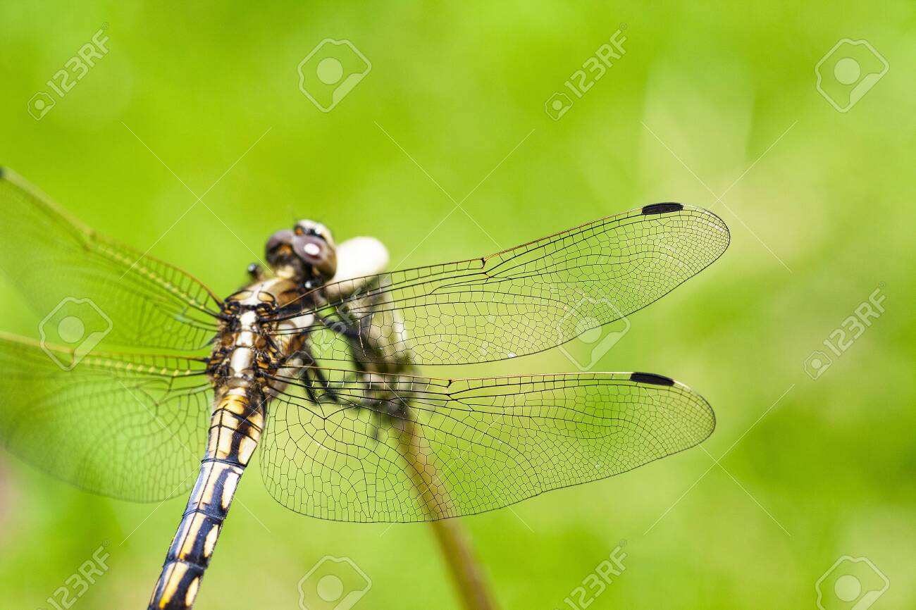 Dragonfly - 134712376